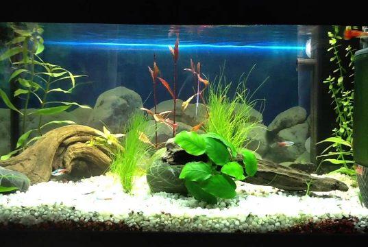Aquarium Care | Aquarium Care Best For Fish